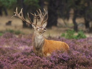 Beautiful_Animal_Wallpaper_rp5pe