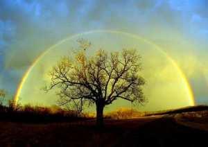 tree_rainbow_435w